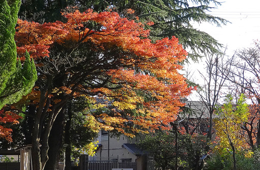 171123_fudai.jpg