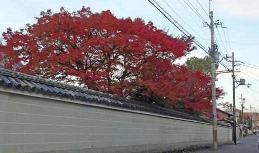 171125_hokyoji.jpg