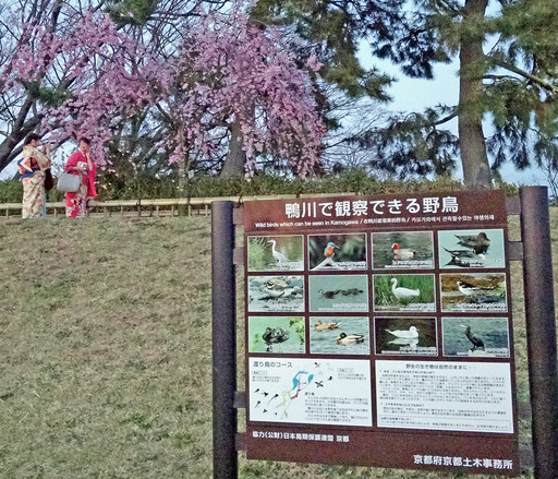 180325_nakaragi.jpg