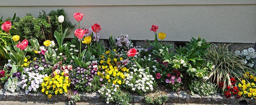 180403_flower.jpg