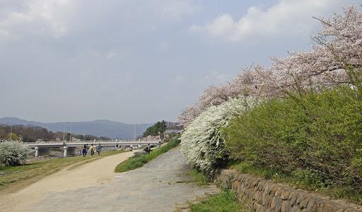 180403_kamogawa.jpg