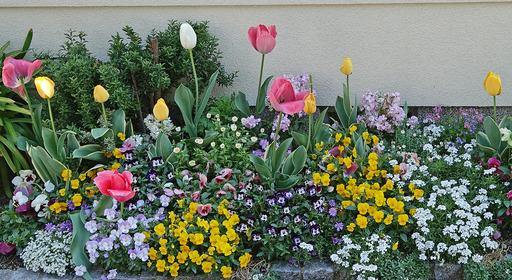 180408_flower.jpg