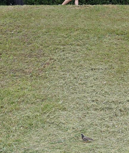 180520_bird.jpg