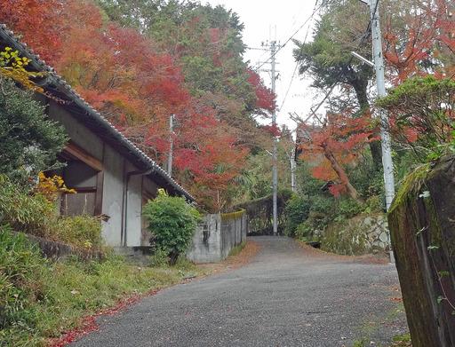181204_yamamiti.jpg