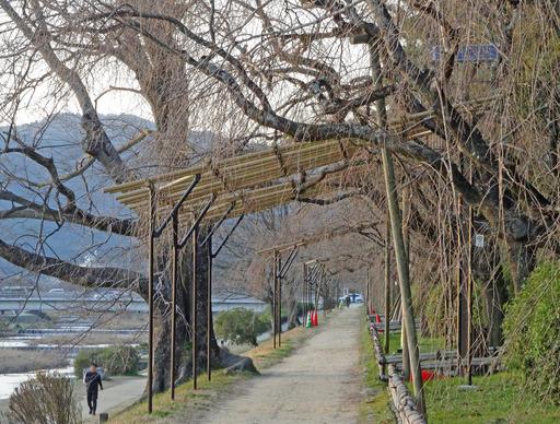 200313_nakaragi2.jpg