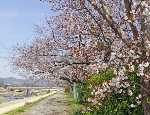 200316_izumoji.jpg