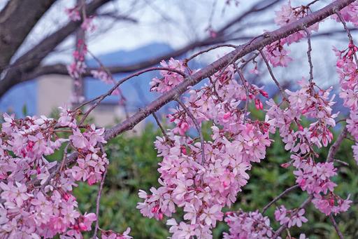 200326_nakaragi2.jpg
