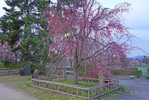 200403_nakaragi2.jpg