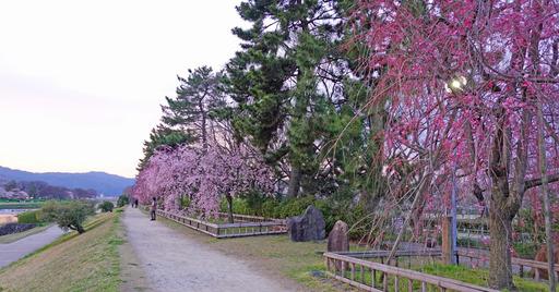 200403_nakaragi3.jpg