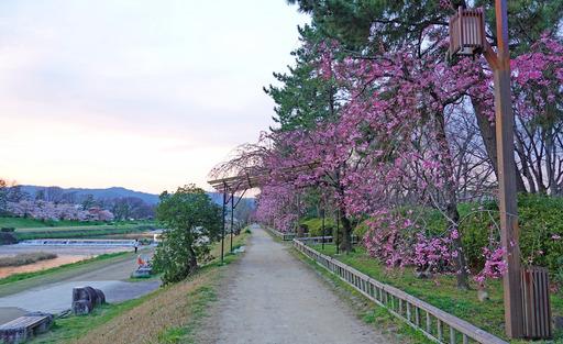 200403_nakaragi5.jpg