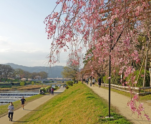 200404_nakaragi5.jpg