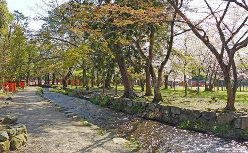 200407_ogawa.jpg