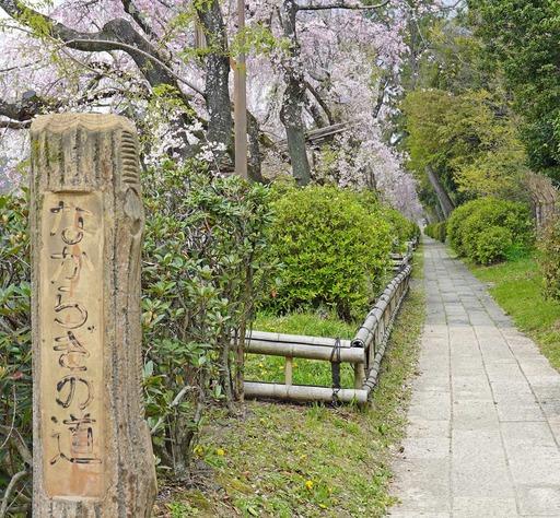 200411_nakaragi1.jpg