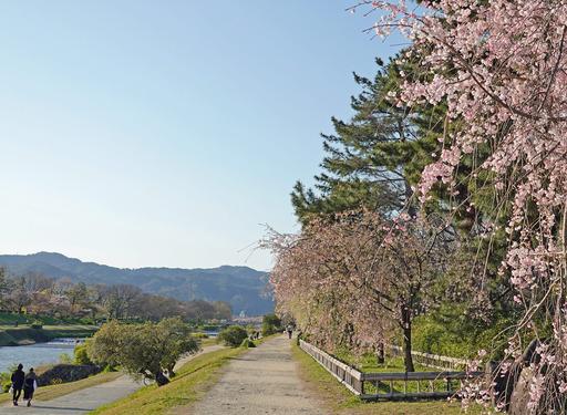 200414_nakaragi1.jpg