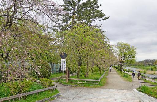 200420_nakaragi1.jpg