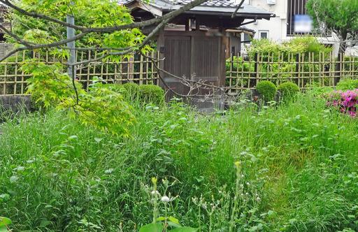 200509_sosui2.jpg