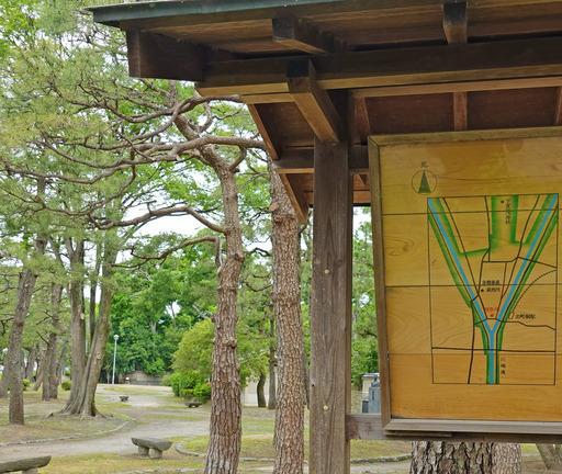 200518_tizu.jpg