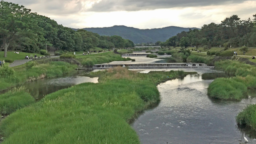 200524_kamagawa2.jpg