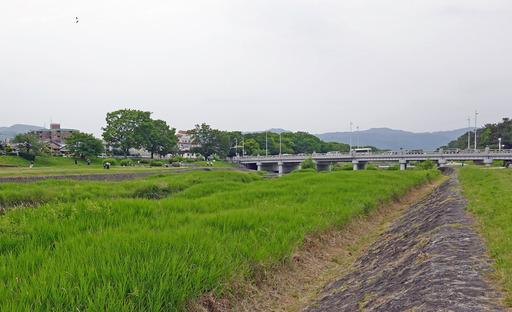 200606_kawa2.jpg