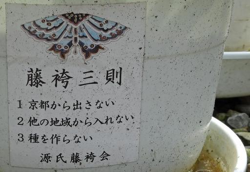 200628_fujibakama2.jpg