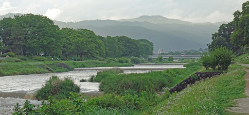 200705_kamo3.jpg