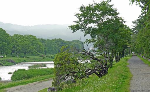 200705_kamo4.jpg