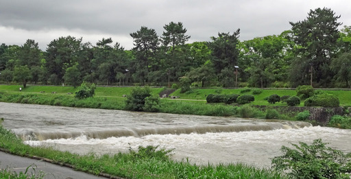 200707_nakaragi.jpg