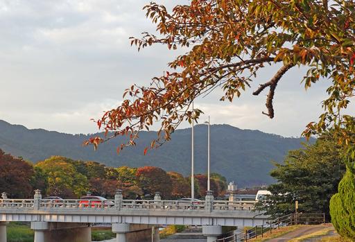 201103_kamo1.jpg