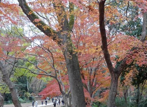 201213_tadasu2.jpg