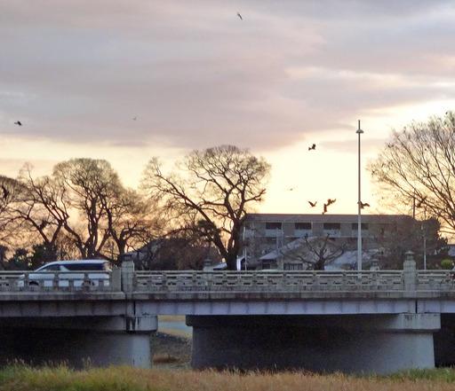 201226_tori1.jpg