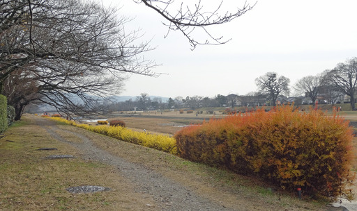 201229_yukiyanagi.jpg