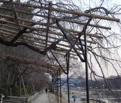 210206_nakaragi.jpg