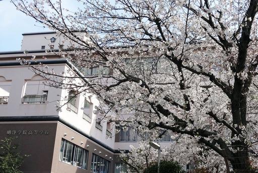 210327_sakura.jpg