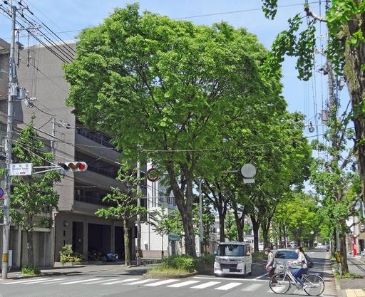 210508_sirakawa.jpg
