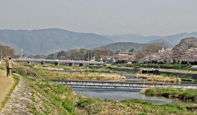 110411_kamosakura3