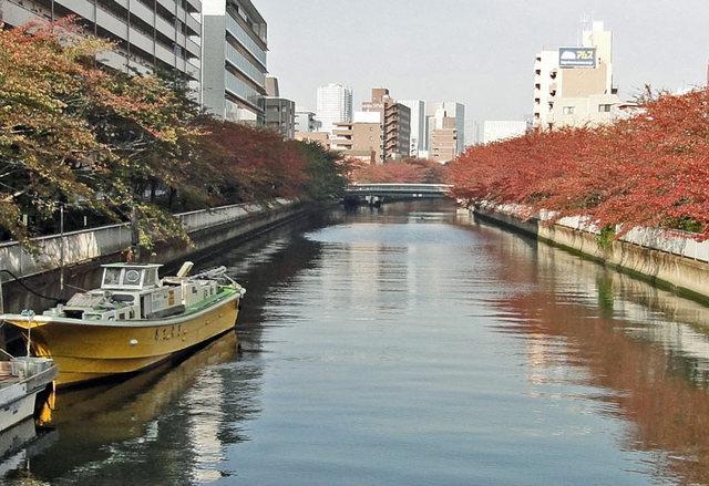 111113_yokobori