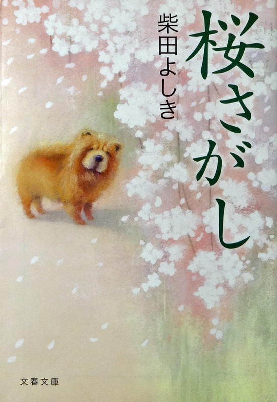 140121_sakurasagasi