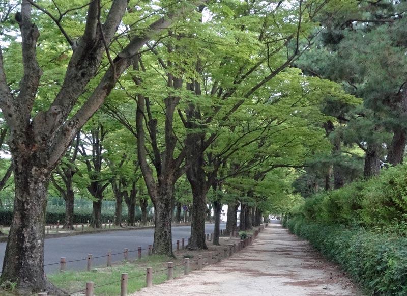 140821_nakaragi