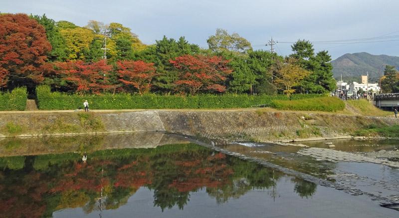 141108_kamogawa1