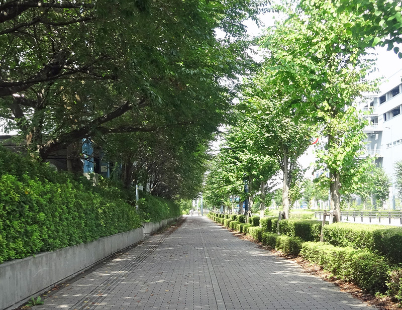 150904_namiki1