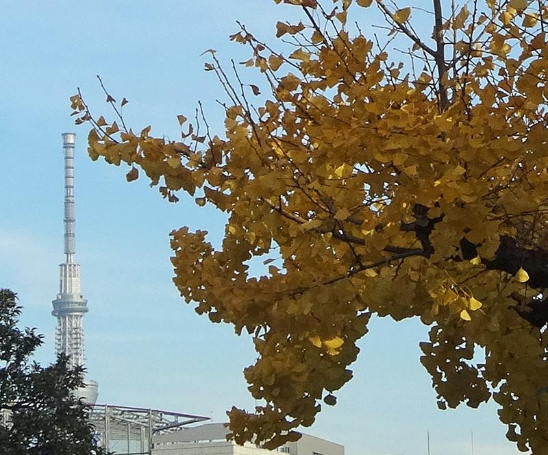 151209_uenoskytree