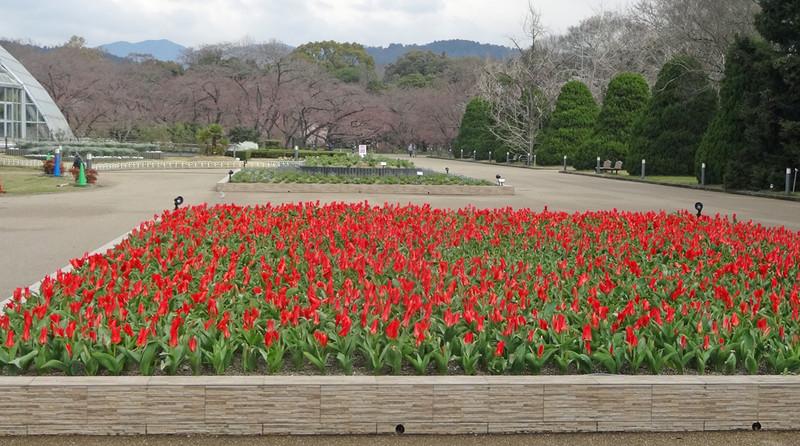 160327_tulip