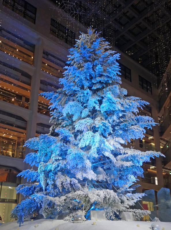 161206_tree